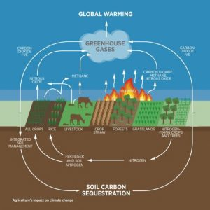 Agriculture's impact on climate change through soil carbon sequestration and greenhouse gas emissions pathways